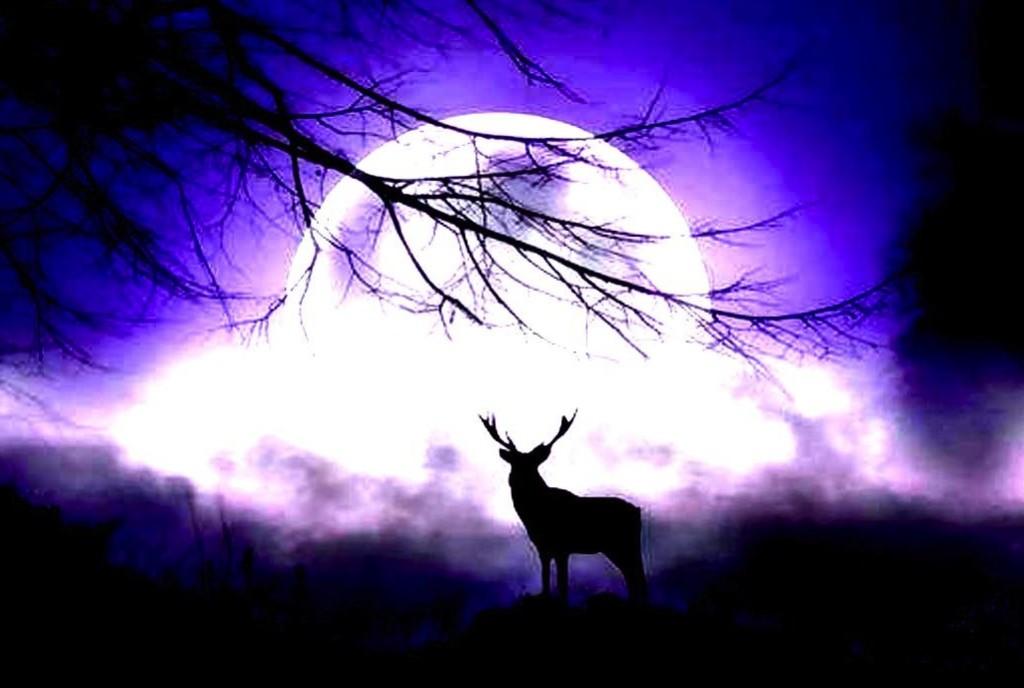 shadow_under_the_moon_sky_wild_deer_night_hogh_contrast_hd-wallpaper-1601937