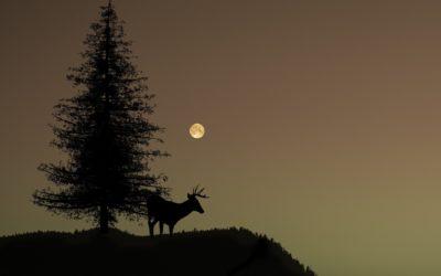 Full Moon in Mrigashira, The Wandering Deer