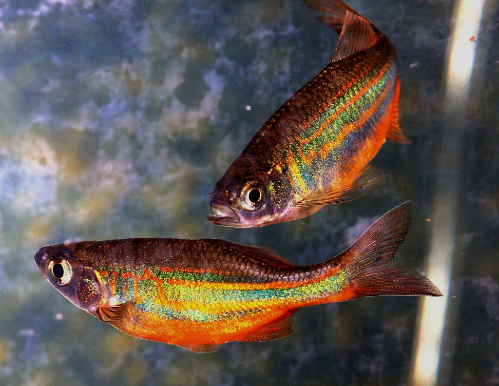 fish-774784_1920
