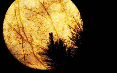 Full Moon in Aries in Bharani Nakshatra