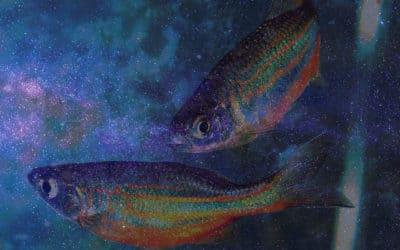 New Moon in Pisces :: Deep Surrender